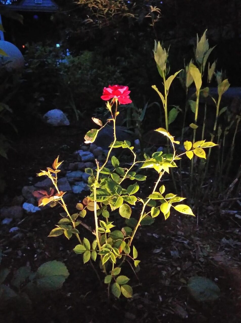 """Debra's Simple Garden"""